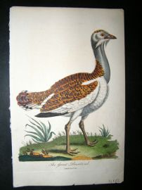 After George Edwards C1800 Hand Col Bird Print. The Great Bustard